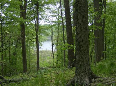 11 Long Lake Drive, Cassopolis, Michigan 49031, ,Land,For Sale,Long Lake,10002672