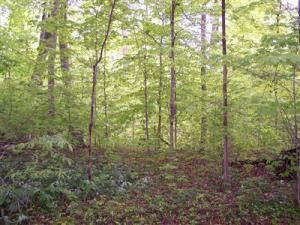Property for sale at 7155 Creekwood Drive, Glenn,  MI 49416
