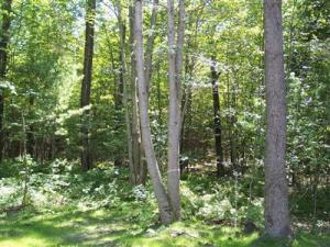 Property for sale at N Darling Lane, Glenn,  MI 49416