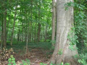 Forest Hall Cassopolis, MI 49031