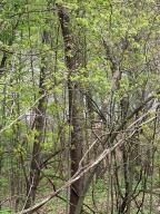 Forest Shores Cassopolis, MI 49031