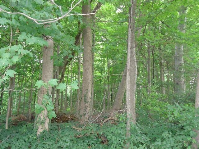 Forest Hall Cassopolis, MI 49031 Photo 4