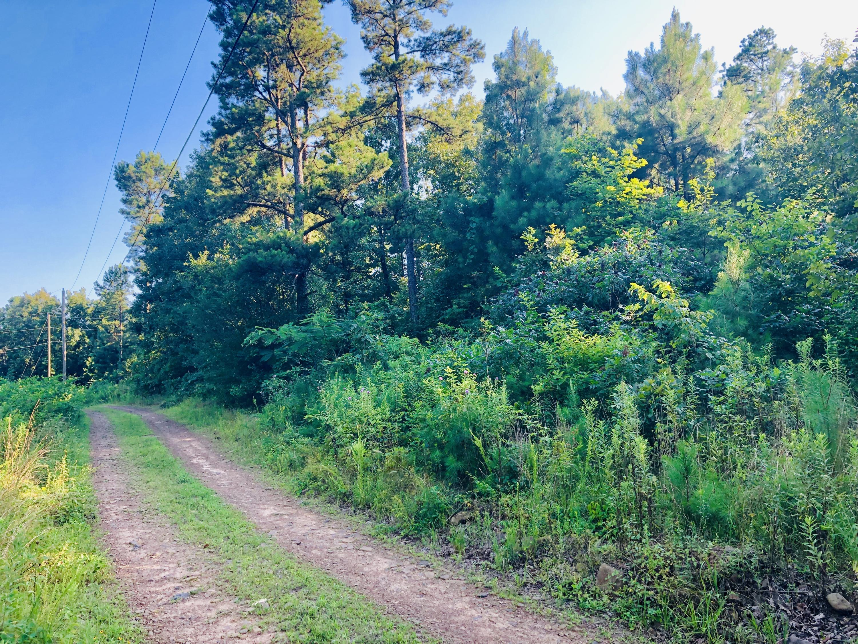 Large photo 5 of sold land at LOT 1 Pine Mountain Estates , Dover, AR
