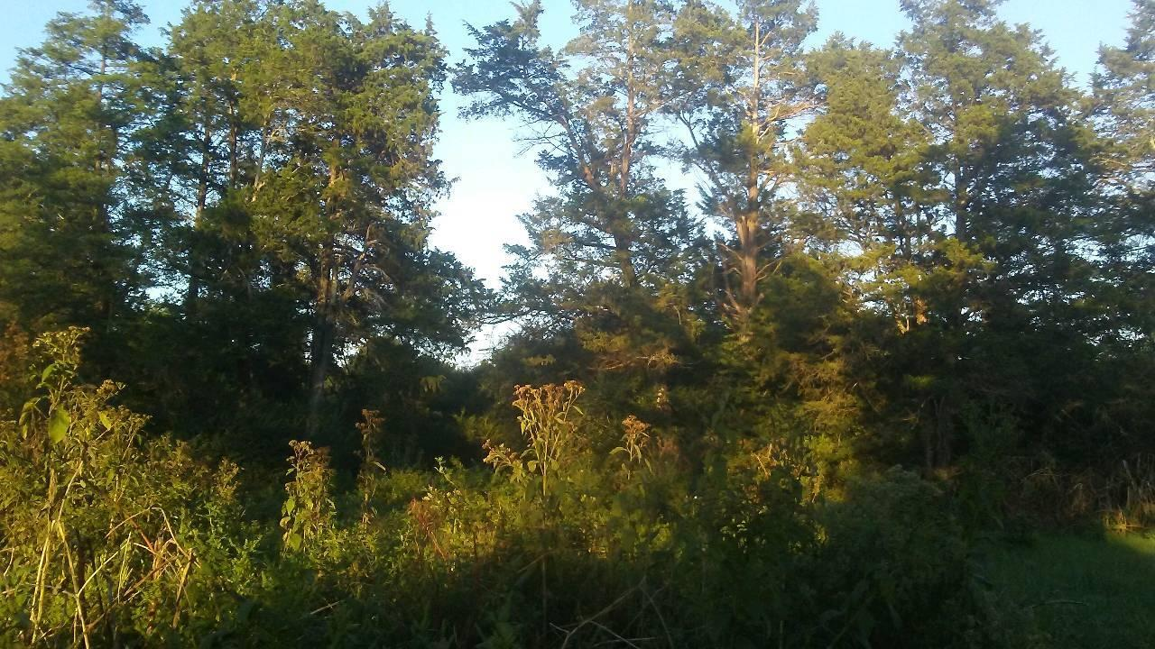 Large photo 6 of sold land at ... Ray Road, Clarksville, AR