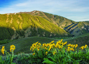 Property for sale at Lrn Property 4, Sun Valley,  ID 83353