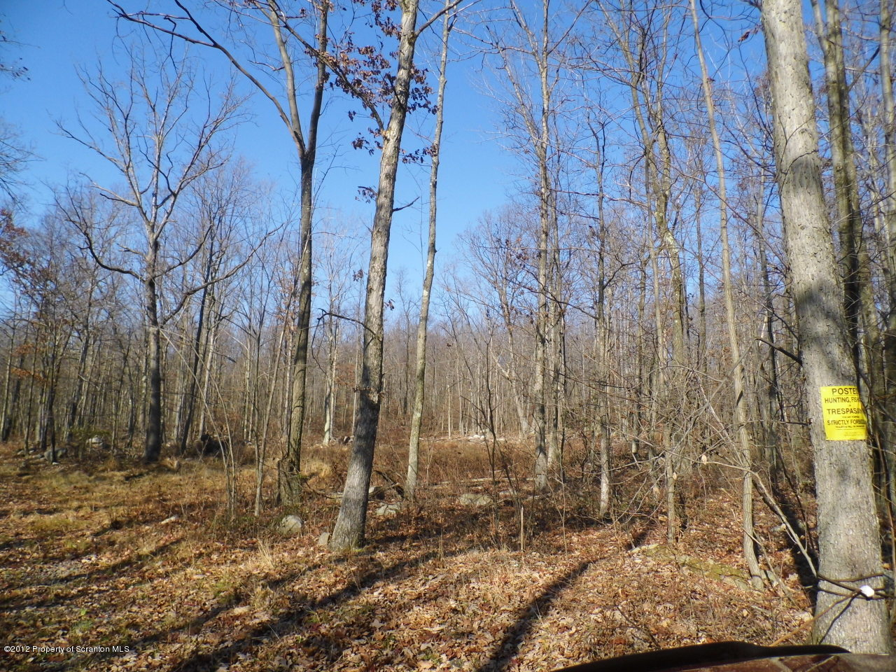 311 ASTON MOUNTAIN Rd, Spring Brook Twp, Pennsylvania 18444, ,Land,For Sale,ASTON MOUNTAIN,12-4018