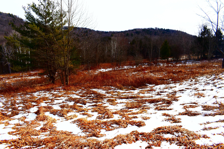 5131 Brushville Road, Susquehanna, Pennsylvania 18847, ,Land,For Sale,Brushville Road,20-454