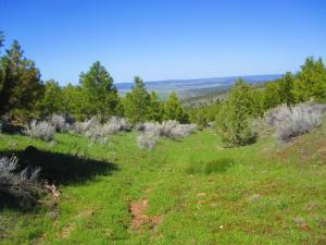 Land for Sale at Lot 9/17 41N25 National Forest Road Adin, California 96006 United States