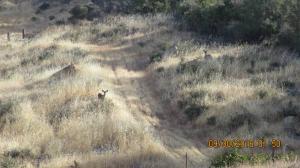 Land for Sale at Buzzard Bieber, California 96009 United States