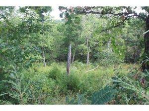 Lot 13 Romans Reeds Spring Mo 65737