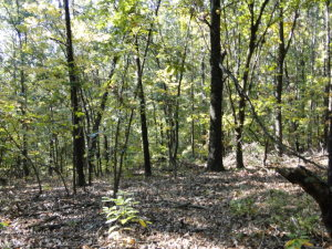 Tbd County Road 1990 Willow Springs Mo 65793