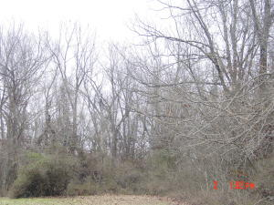 Lot 11 12 Oak Grove Addition Crane Mo 65633