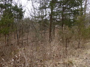 Tbd Minnow Bucket Trail Wheatland Mo 65779