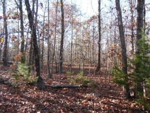 T665 Birch Tree Mo 65438