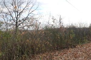 Tbd Spring Creek Branson Mo 65616