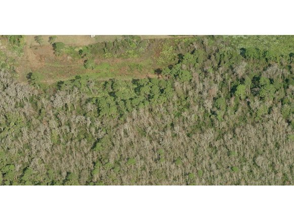 Land for Sale at 7965 Adrian Grant Valkaria, Florida 32909 United States