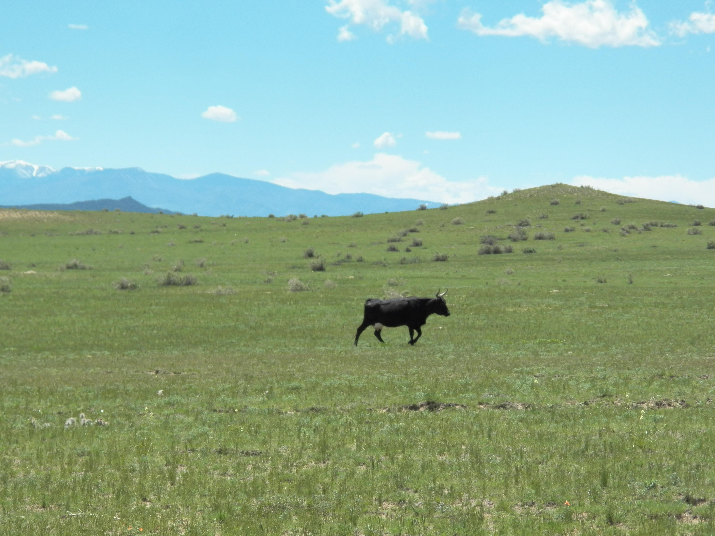 Property located at TBD CO. RD. 120  Walsenburg CO 81089 photo
