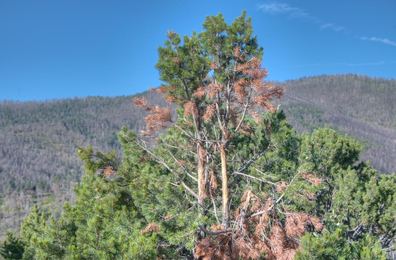 Property located at TBD County Road 421  La Veta CO  photo