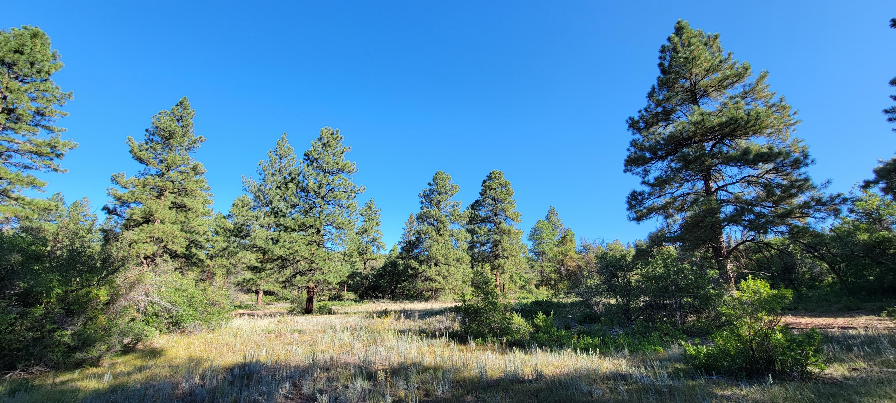 Property located at  Beaver Creek Ranch Drive  Bayfield CO 81122 photo
