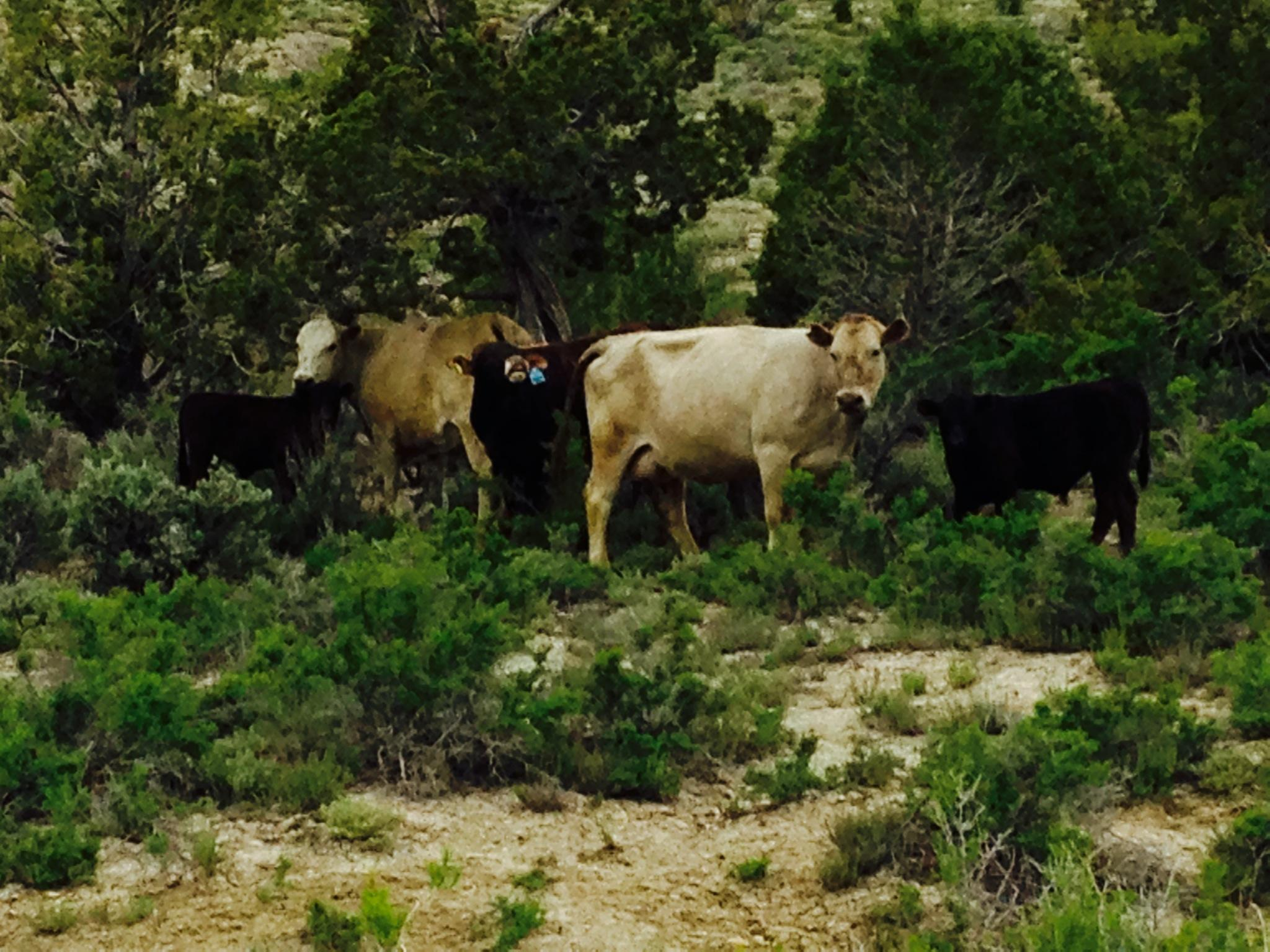 Rare private property of 466 acres near Tropic/Cannonville, UT.  Views of Bryce Canyon National Park and Escalante Mountain. Paria river runs through corner of property. Perfect for cattle grazing winter months. Not many parcels like this in Southern Utah.