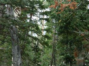 437 E Trail 22