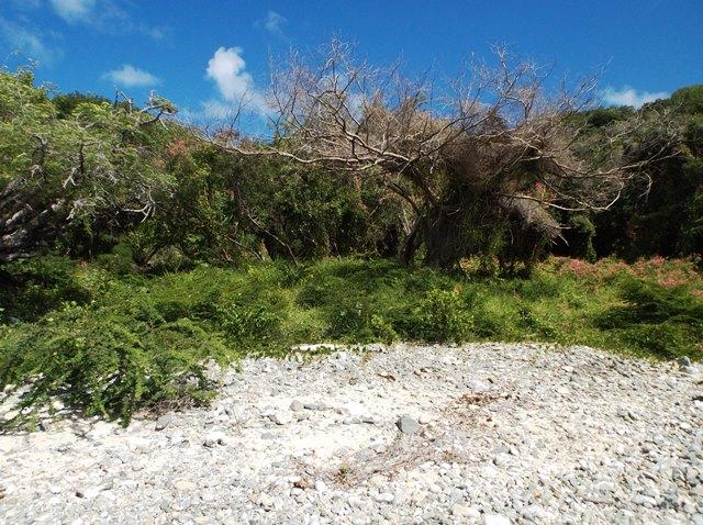 St John, Virgin Islands 00830, ,Land,For Sale,18-119