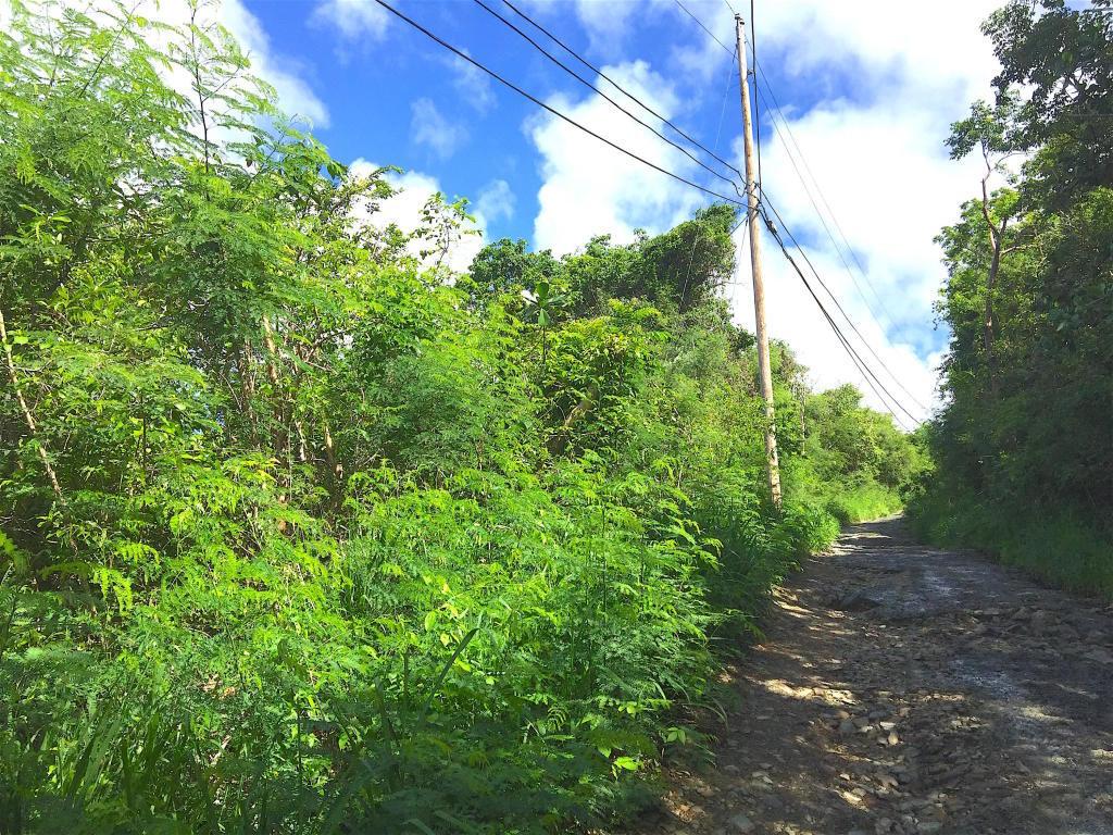 St John, Virgin Islands 00830, ,Land,For Sale,18-265