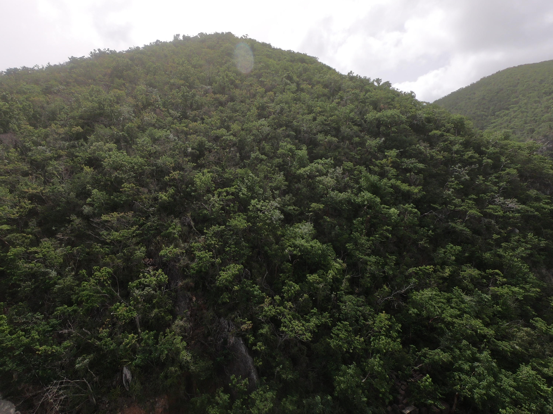 St John, Virgin Islands 00830, ,Land,For Sale,19-253