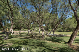 Grove Of Pecan Trees