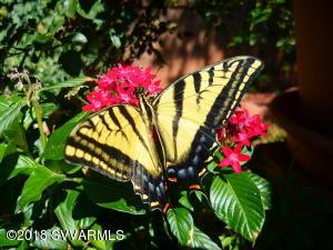 An Exhibit Of Butterflies