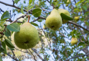 FRUIT TREES ON PROPERTY