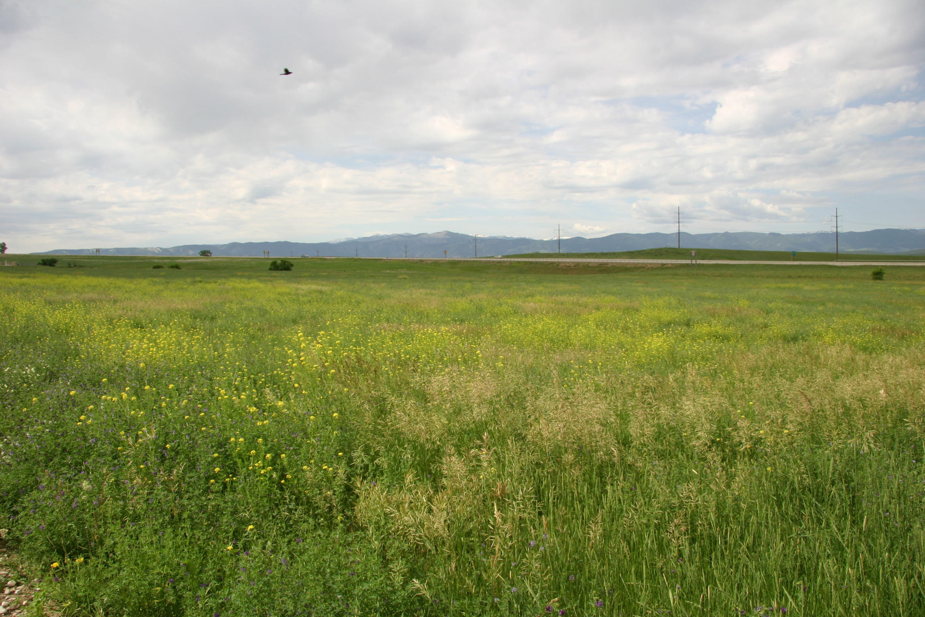 Solutions Way, Sheridan, Wyoming 82801, ,Building Site,For Sale,Solutions,19-113