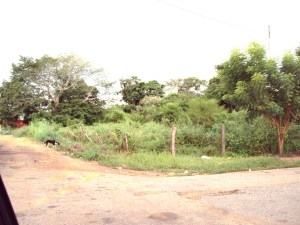Terreno En Venta En Carretera Falcón Zulia, Km 42, Venezuela, VE RAH: 10-7237