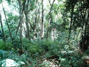 Terreno En Venta En Los Teques, Cooperativa Guaicaipuro, Venezuela, VE RAH: 11-6699