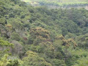 Terreno En Venta En Santa Lucia, Santa Lucia, Venezuela, VE RAH: 13-5786