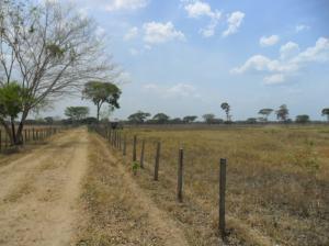 Terreno En Venta En San Carlos, Cantaclaro, Venezuela, VE RAH: 14-4282