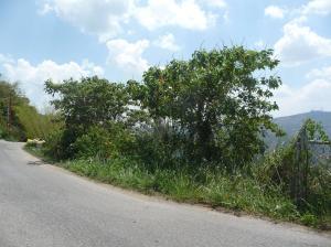 Terreno En Venta En Caracas, Sabaneta, Venezuela, VE RAH: 14-6309