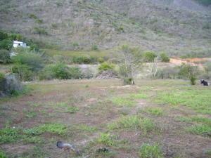 Terreno En Venta En Municipio Arismendi La Asuncion, Guacuco, Venezuela, VE RAH: 14-12935