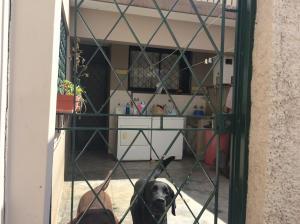 Casa En Venta En Caracas - Los Palos Grandes Código FLEX: 14-13176 No.15