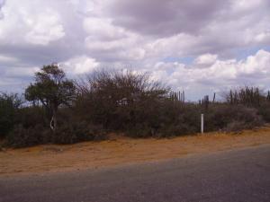 Terreno En Venta En Punto Fijo, Los Taques, Venezuela, VE RAH: 15-398