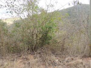 Terreno En Venta En Caracas, Caicaguana, Venezuela, VE RAH: 15-4582