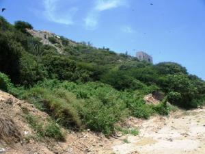 Terreno En Venta En Catia La Mar, Playa Grande, Venezuela, VE RAH: 15-9649