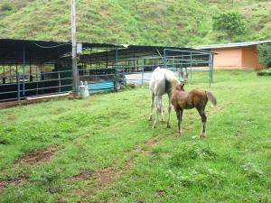 Terreno En Venta En Tinaquillo, Tinaquillo, Venezuela, VE RAH: 15-11287