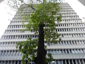 Oficina En Venta En Caracas, Los Palos Grandes, Venezuela, VE RAH: 15-12280