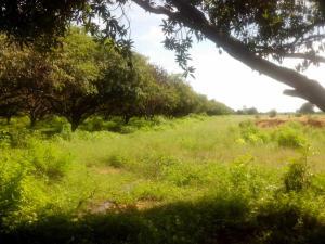 Terreno En Venta En Santa Cruz De Mara, Via Principal, Venezuela, VE RAH: 15-13988