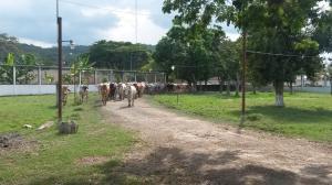 Terreno En Venta En Municipio Carlos Arvelo, Guigue, Venezuela, VE RAH: 16-268