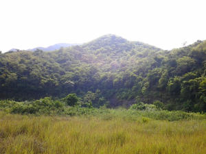 Terreno En Venta En Municipio Naguanagua, Maã±Ongo, Venezuela, VE RAH: 16-4750