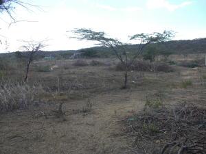 Terreno En Venta En Coro, Las Calderas, Venezuela, VE RAH: 16-15612