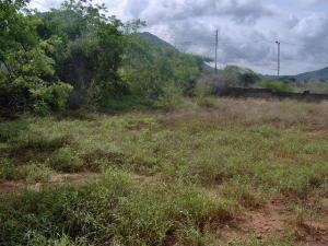 Terreno En Venta En Municipio Antolin Del Campo Paraguachi, El Cardon, Venezuela, VE RAH: 17-1029