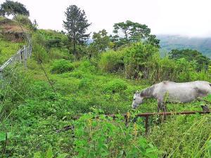 Terreno En Venta En Caracas, Gavilan, Venezuela, VE RAH: 17-1041